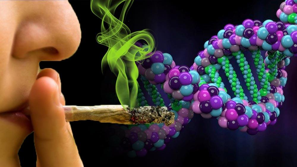 Wpływ DNA na działanie marihuany