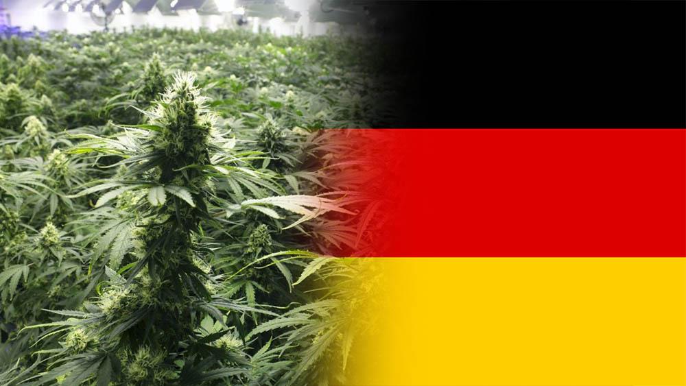 Trzy firmy uzyskały licencję na uprawę medycznej marihuany w Niemczech