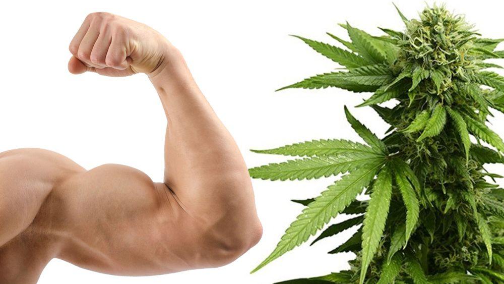 Używanie marihuany może zwiększyć motywację do treningów i ćwiczeń