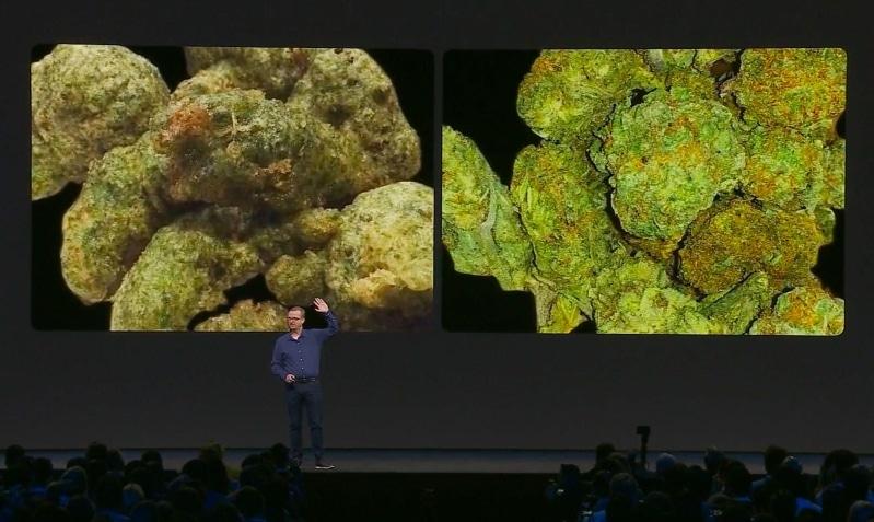 Algorytm Facebooka odróżni marihuanę od brokułów