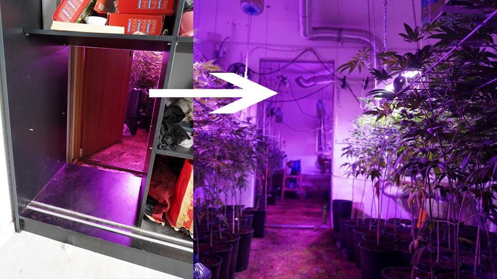 Uprawa marihuany ukryta za szafą