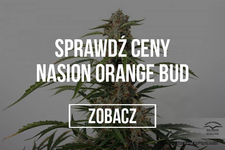 Nasiona Orange Bud Dutch Passion