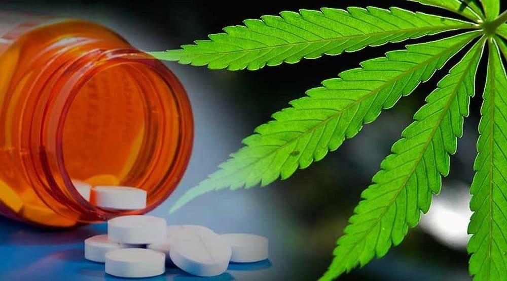 Marihuana alternatywą dla opioidowych leków przeciwbólowych