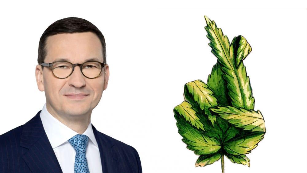 Premier Mateusz Morawiecki o legalizacji marihuany