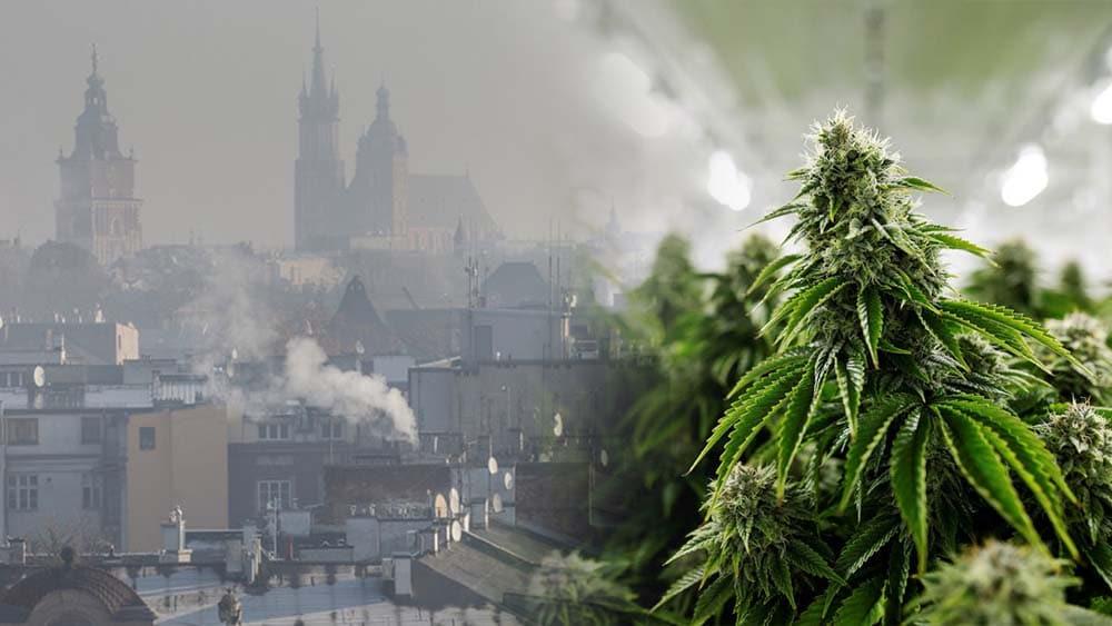 Smog jest bardziej szkodliwy, niż marihuana