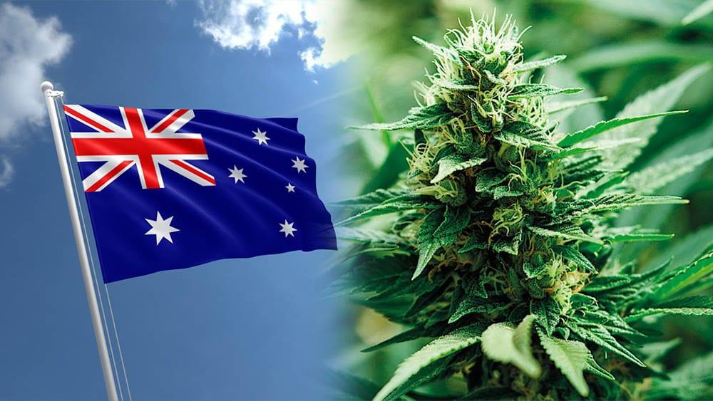 W stolicy Australii marihuana jest już legalna