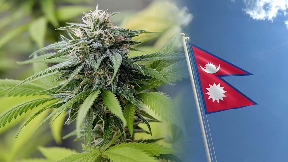 Rząd Nepalu chce zalegalizować marihuanę
