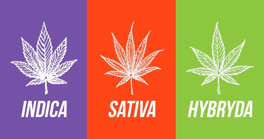 Indica - sativa - hybrydy