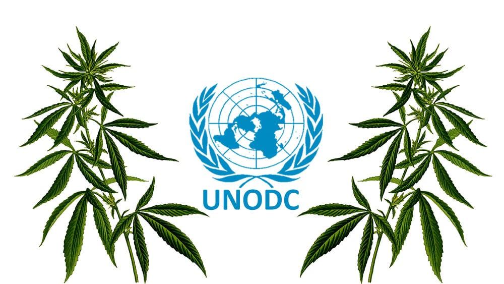ONZ odroczyło głosowanie nad zmianą klasyfikacji konopi indyjskich