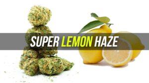 Super Lemon Haze