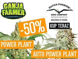 nasiona marihuany GanjaFarmer.com.pl