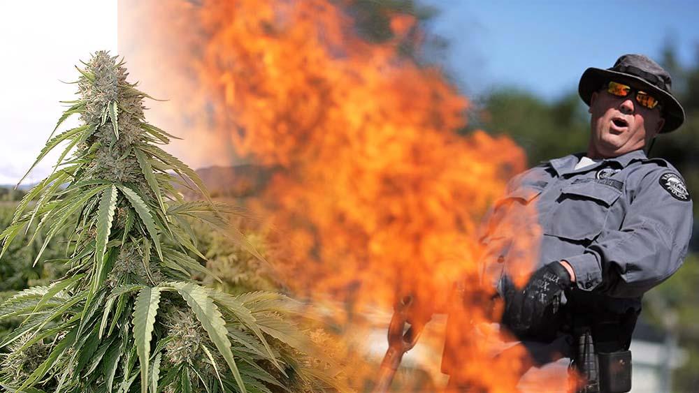 DEA poszukuje firmy do spalania 500kg marihuany na godzinę